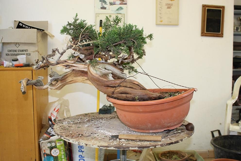 עץ בתהליך עבודה
